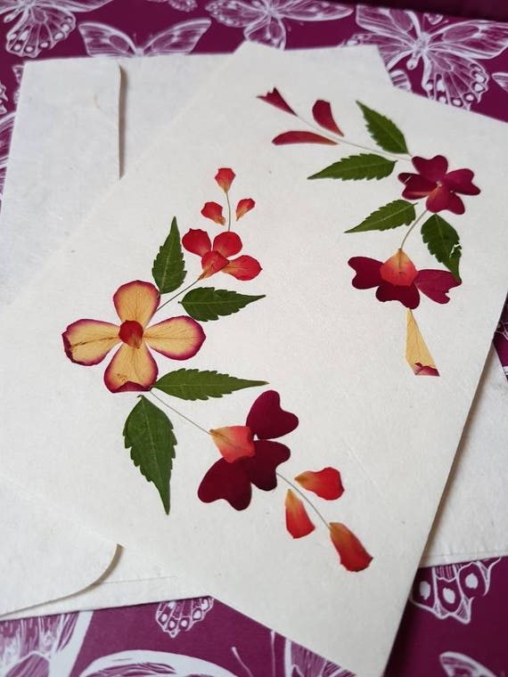 Real pressed flower greetings card blank inside