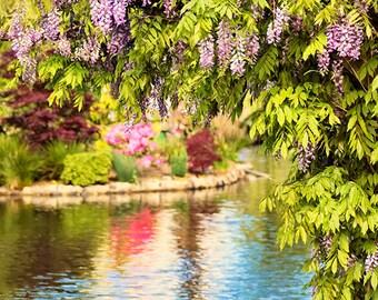Wisteria, Garden Prints, Garden Art, Flower Wall Art, Floral Decor, Flower Photography, Flower Wall Decor, Reflections, Floral Art Print