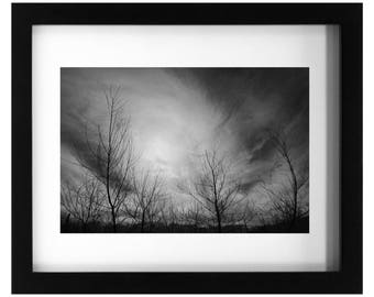 Photographic Print, Black and White Photo, Branches, Tree Art, Fine Art