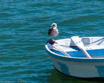 "Wall Art, ""Seagull"", Capitola, Capitola Wharf, Beach, Pier, Rowboat"