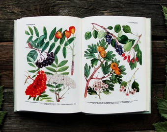Cultivated Plants - 80 Color Plates - Hardcover - Vintage Botanical Book, 1978. Fruit Vegetables Berries Flowers Drawing Illustration Print