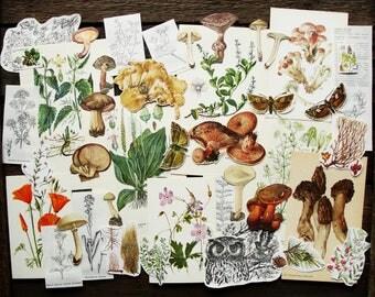 Wild Nature - Vintage Paper Ephemera Craft Pack, 40+ Piece - Junk Journal Smash Book Scrapbooking Nature Journals Collage Supplies Set