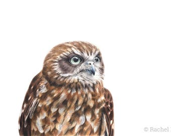 "5x7"" Southern Boobook Owl - Australian Birds - Wildlife - Owl Print - Woodland Nursery Prints"