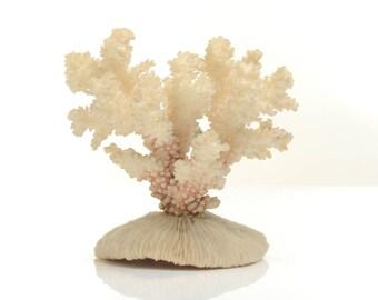 Natural coral specimen, sea coral stone, natural finger coral, natural white coral taxidermy