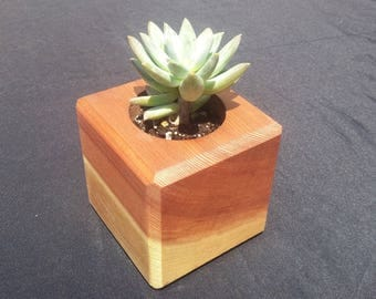 Cute Redwood Succulent Planter Cubes!