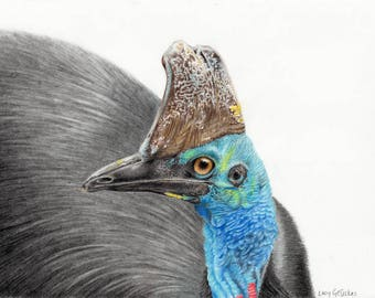 Australian Southern Cassowary - coloured pencil drawing