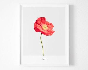 Poppy Print, Poppy Photography, Poppy Wall Art, Poppy Decor, Poppy Printable, Poppy Flower, Modern Poppy Print, Modern Poppy Print