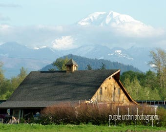 """Barn Photography, Mt. Rainier, Country Picture, Farm Artwork, Old Buildings, Farmhouse Decor, Rustic Wall Art, """"Gold Under the Mountain"""""""