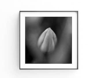 Black and white wall art, Tulip decor, Subtle wall art, Social media, Stock photography, 12x12, Commercial use, Fine art photo, Modern art