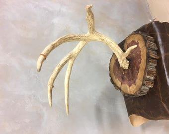 Deer antler jewelry hanger
