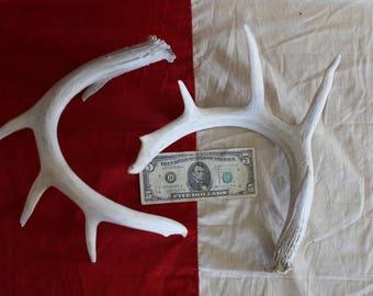 Whitetail Deer Antler 12 pt Loose Set