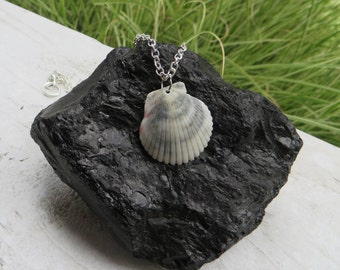 Grey-Striped Shell Necklace