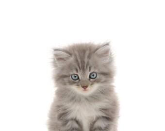 Happy Kitten Print, Baby Animals Nursery Print, Quick Gift for Baby Shower, Kitten for Nursery, Gift for New Baby, Adorable Pretty Kitten