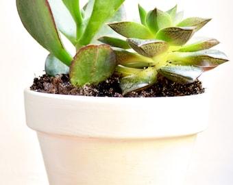 Indoor Planter - House Plant - Home Decor - Hygge Decor - Succulent Mini Planter - Cactus Pot - Jungle Decor - Office Decor - Handmande