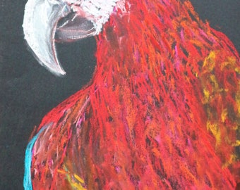 "Picture ""Parrot"""