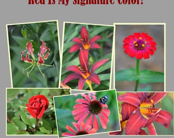 6 Fine Art Flower Photo Greeting Cards, Garden Notecard Set, Fine Art Flower Photo Stationary, Garden Greeting Cards, Red Cards, Nature Card