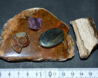 Fossil Collection Natural Jewelery Set Minerals&Fossils Mineral Craft Set Exotic Destinantions Fossil Home Decor Earth Energy Rock