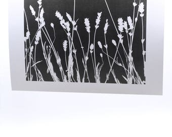 "Photograms-""Grasses i"""