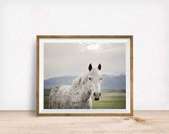 Freckles Horse Print, Horse Photo in Color, Physical Print, Appaloosa Horse