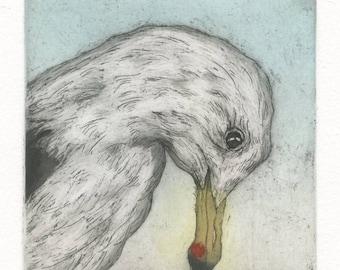 California Gull, Fine Art Etching of seagull