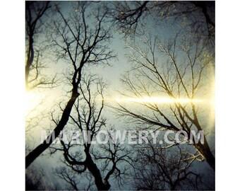 Holga Photography Print, Trees in Prospect Park, 8x8 Inch Metallic Print, Brooklyn New York, Nature Photography