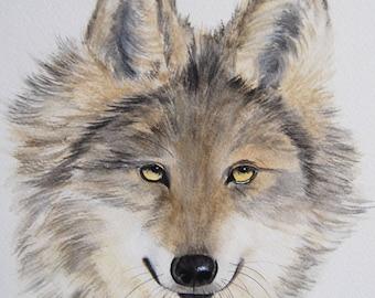 loup, animaux, art animalier, art, dessin animalier, aquarelle originale signée