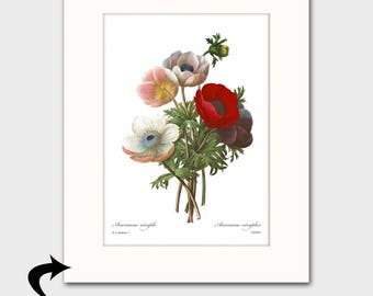 Poppy Art w/Mat (Flower Nursery, Gift for Her, Bedroom Wall Decor) Matted Redoute Botanical Print