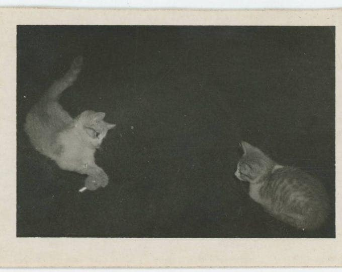Vintage Snapshot Photo: Two Cats Playing (712629)