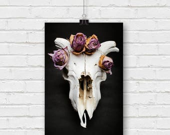 life and death - sheep skull with dried roses