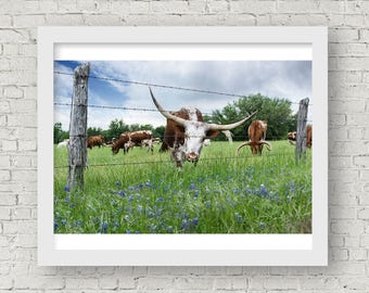 Texas Longhorn Art, Longhorn Art, Texas Photography, Texas Wall Art Print