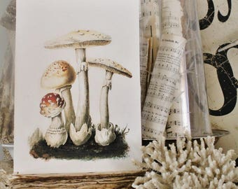 Vintage MUSHROOM Wood Sign Print Farmhouse Decor Page Wall Art Print  Fixer Upper Decor Natural History SPRING SUMMER Botanical Easter