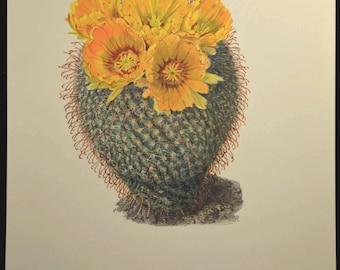 Cactus Print Flowering Cacti Print Botanical Print Nature