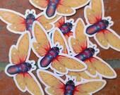 star cicada /// illustration sticker