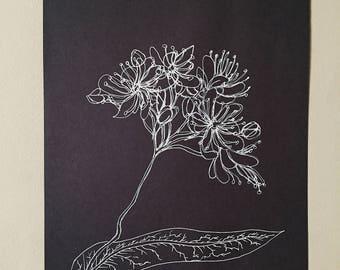 ORIGINAL Amazonian Flower Illustration