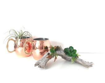 Drift Wood Branch With Faux Succulents, Table-scape Decor, Handmade Woodsy Table Decor