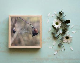 Photo print- cobwed, home decor, wall art, original photo