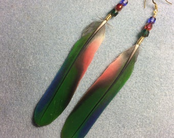Green, red, and blue Pionus parrot feather earrings adorned with green, red and blue Czech glass beads.