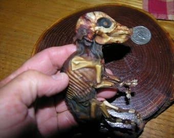 Petrified/Mummified/Preserved Fetal Piglet