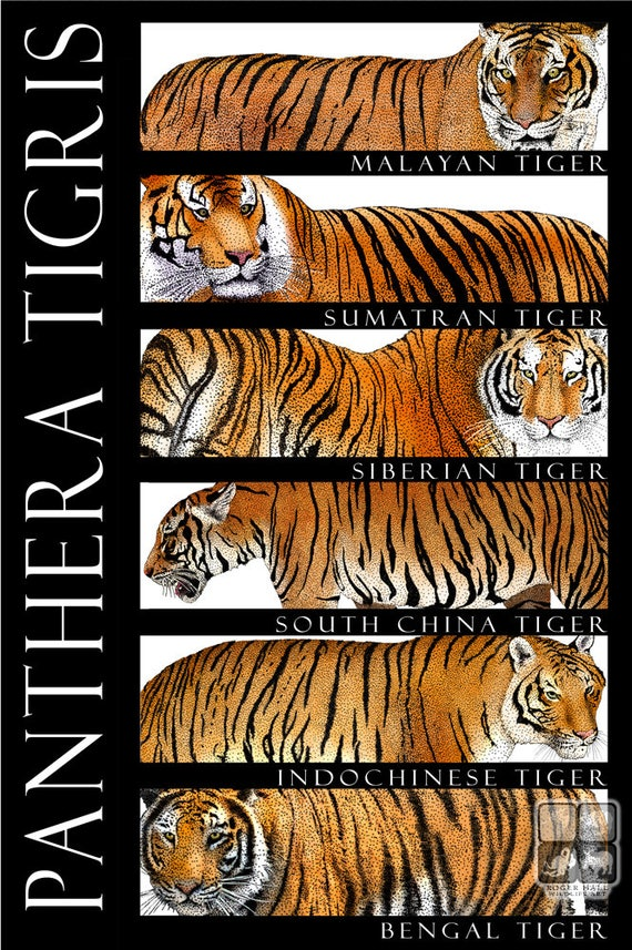 Tigers of the World
