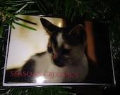 Kitten, Seasons Greetings...