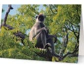 Langur Monkey Blank Greet...