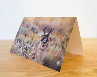 Greeting Card Pack - 5 x 7 inch Folded  - Pronghorn in the Sage, Grand Teton National Park, Wyoming