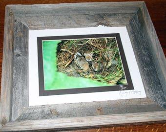 Baby Bunnies in a nest