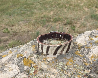 "ZEBRA SAFARI Hair on Genuine leather Dog Collar 1.5"" wide"