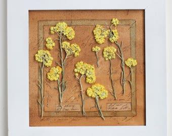 Pressed Flower Art, Herbarium, pressed flower, pressed plants, pressed flower framed, 12,6x12,6 inches (32x32 cm's), pressed herbs