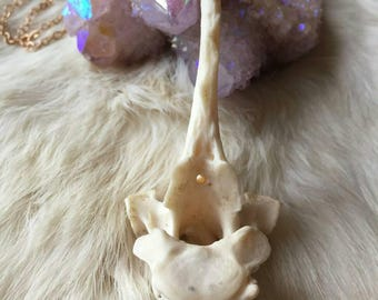 Coyote Vertebra Necklace