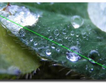 Postcard, water drops