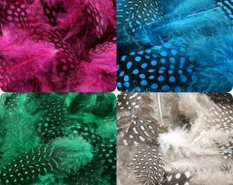 Set of 30 or 100 feathers Guinea fowl (dot) genuine natural (beige), pink fuchsia, blue or green (small feathers between 2 and 10 cm)