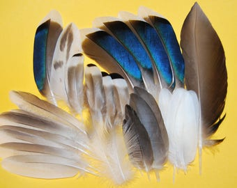 CC10 - Set of mallard duck - 26plumes-5/12cms - natural feathers (CC10)