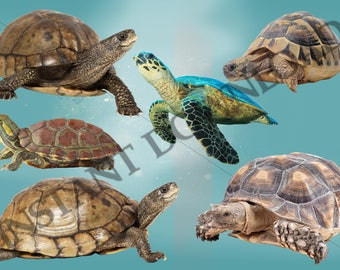 Turtle digital overlays for photoshop, high res, INSTANT DOWNLOAD, sea animals, sea creatures
